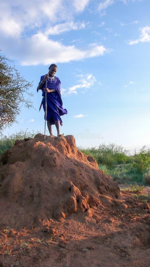 Olpopongi, província de Kilimanjaro/Tanzânia: 29 Em dezembro de 2015: guerreiro novo do Masai de Tanzânia em escavações tradicion fotografia de stock royalty free