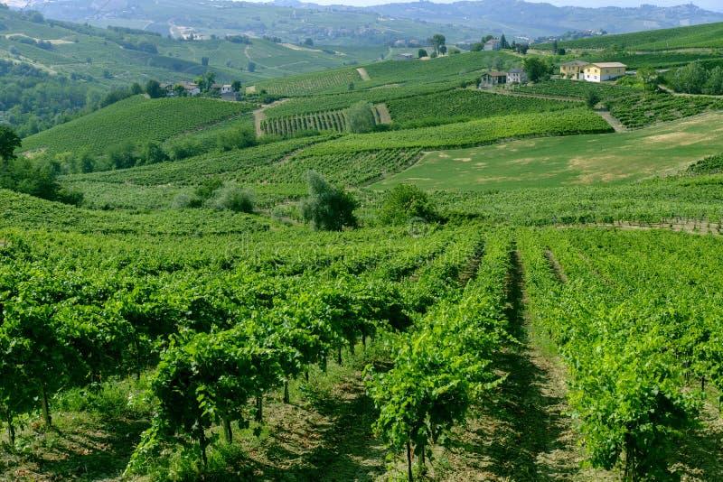 Oltrepo Pavese Italien, lantligt landskap på sommar arkivfoto