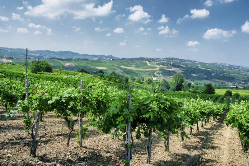 Oltrepo Pavese Italien, lantligt landskap på sommar arkivbild