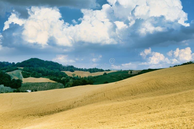 Oltrepo Pavese Italien, lantligt landskap på sommar fotografering för bildbyråer