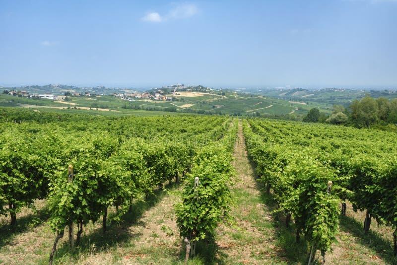 Oltrepo Pavese Italien, lantligt landskap på sommar royaltyfri bild