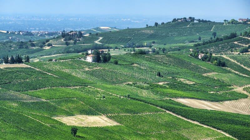 Oltrepo Pavese Italien, lantligt landskap på sommar royaltyfria bilder