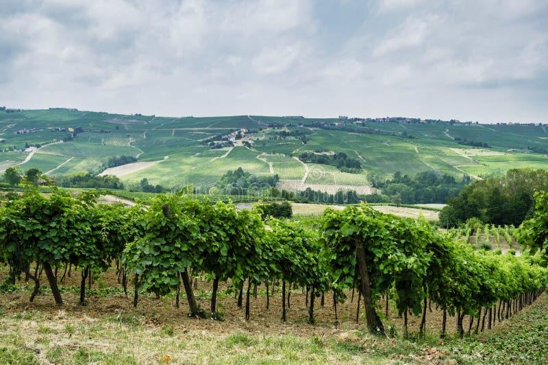 Oltrepo Piacentino Italien, lantligt landskap på sommar royaltyfri foto