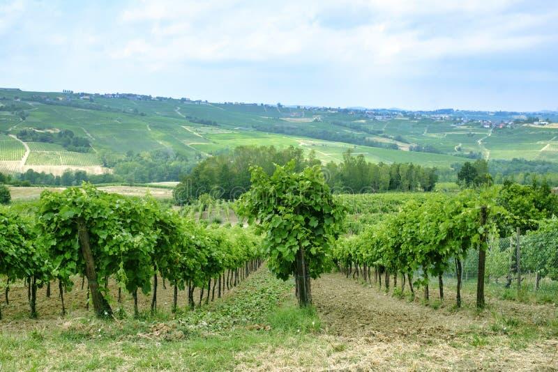 Oltrepo Piacentino Italien, lantligt landskap på sommar arkivfoton