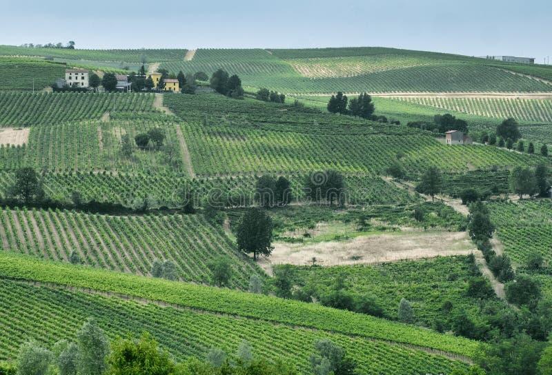 Oltrepo Piacentino Italien, lantligt landskap på sommar arkivfoto