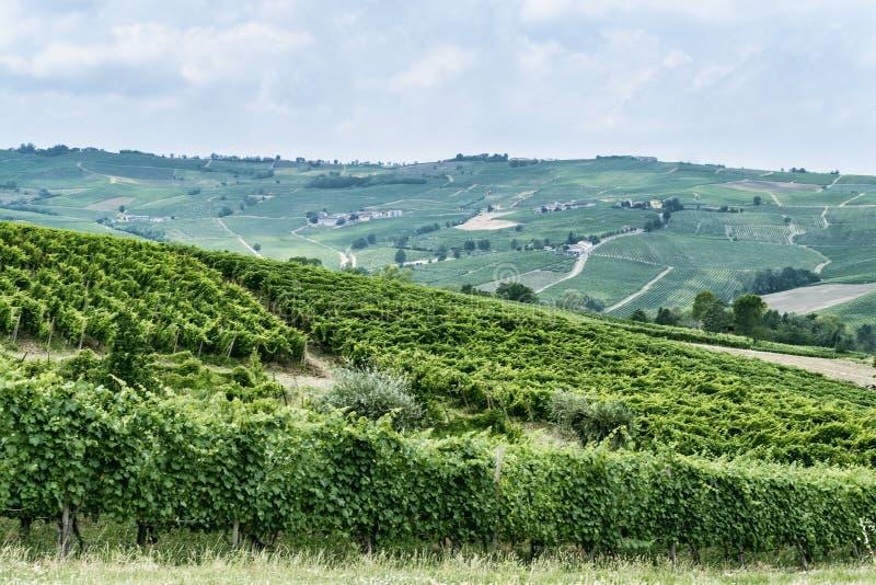 Oltrepo Piacentino Italien, lantligt landskap på sommar fotografering för bildbyråer