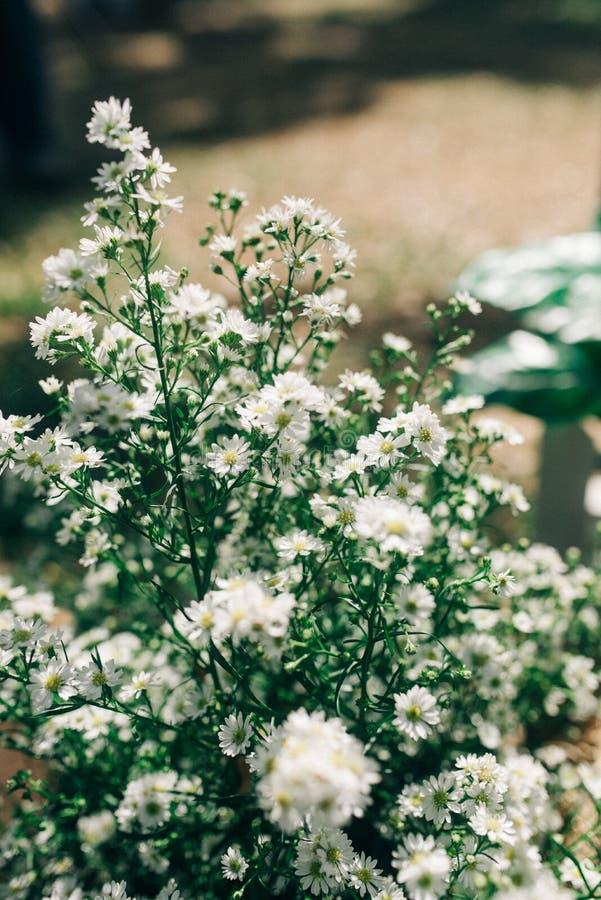 Olvídeme no flor en la montaña foto de archivo