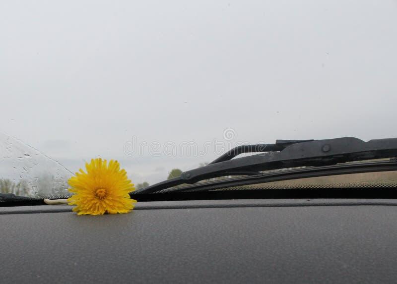 Olvidó la flor imágenes de archivo libres de regalías