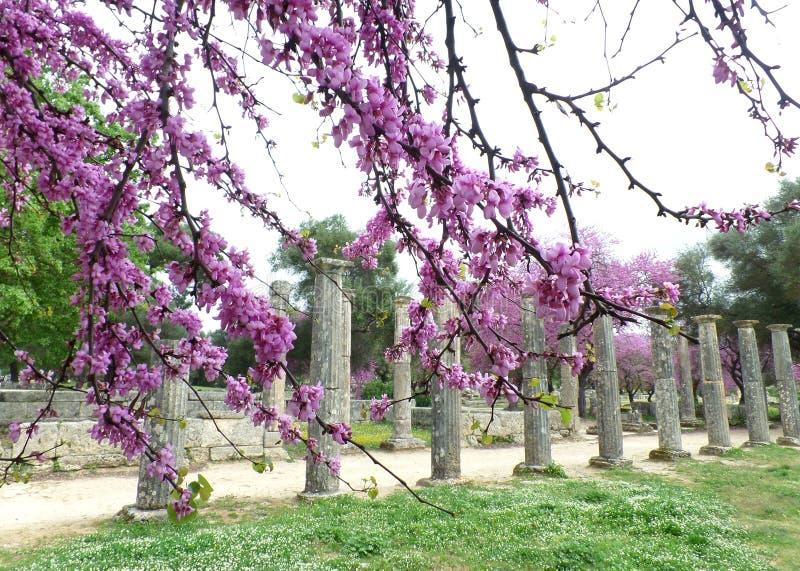 Olympia Archaeological Site med härliga rosa blomma blommor fotografering för bildbyråer