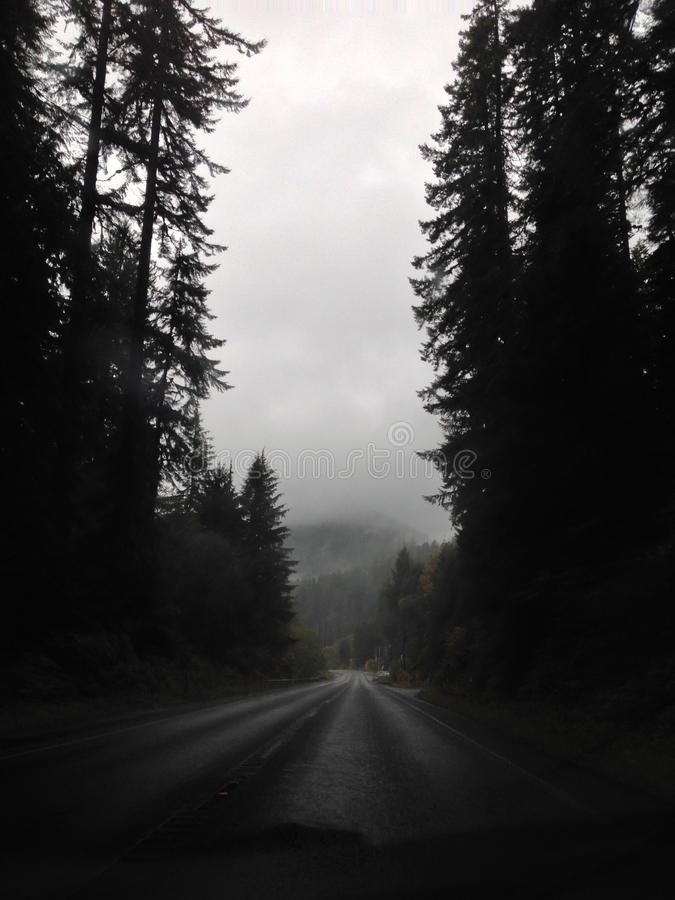 Olympic national forest royalty free stock photos