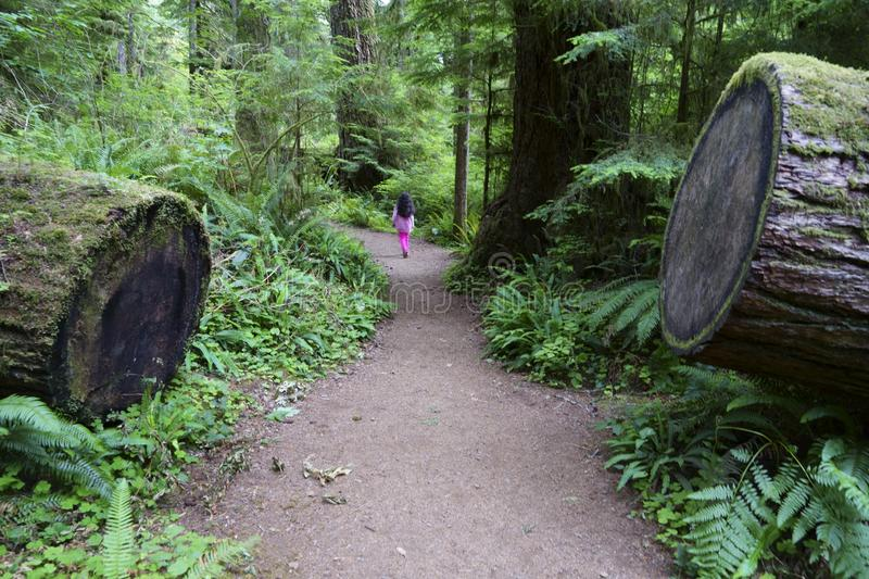 A girl walking through Olympic National park stock images