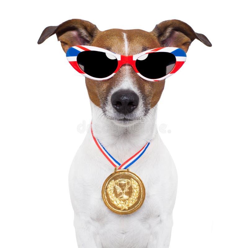 Olympische hond royalty-vrije stock fotografie