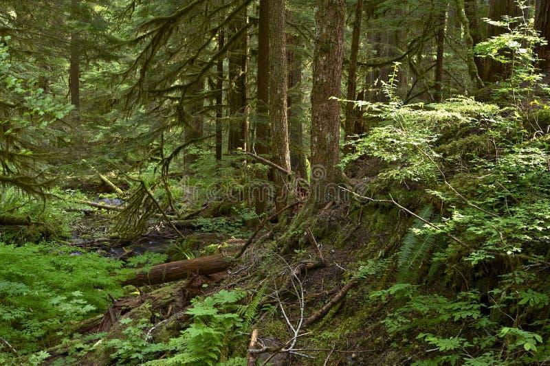 Olympische Waldspur