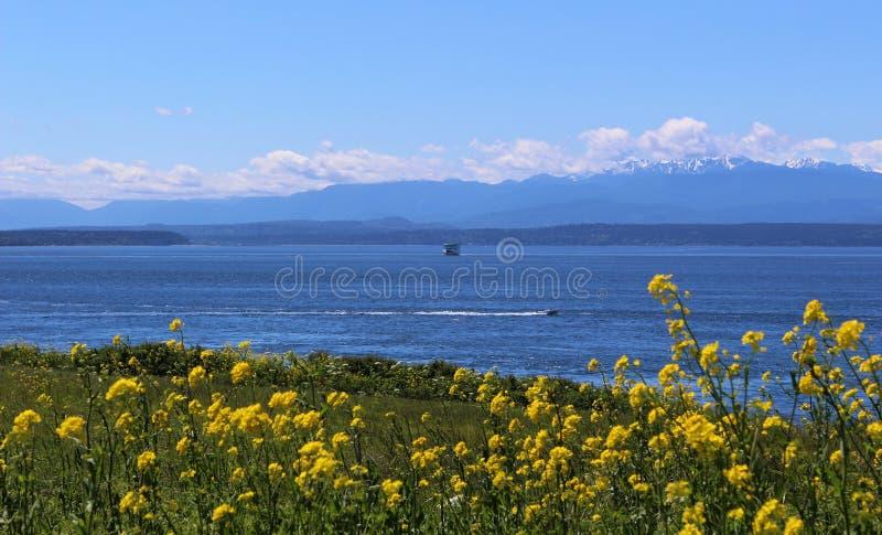 Olympischer Gebirgszug und Puget Sound-Ansicht über ein Feld auf Whidbey-Insel stockfotografie