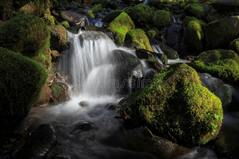 Olympisk nationalpark, Washington State arkivfoto