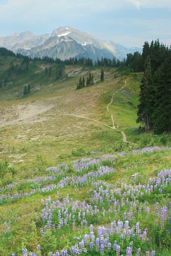 Olympiskt fotvandra för nationalpark fotografering för bildbyråer