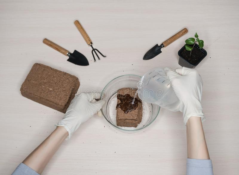 Coconut substrate for soil. Pressed coconut substrate briquette.  stock photography
