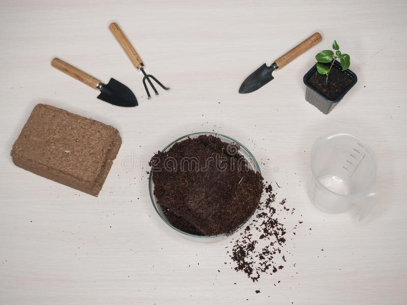 Coconut substrate for soil. Pressed coconut substrate briquette.  royalty free stock photography