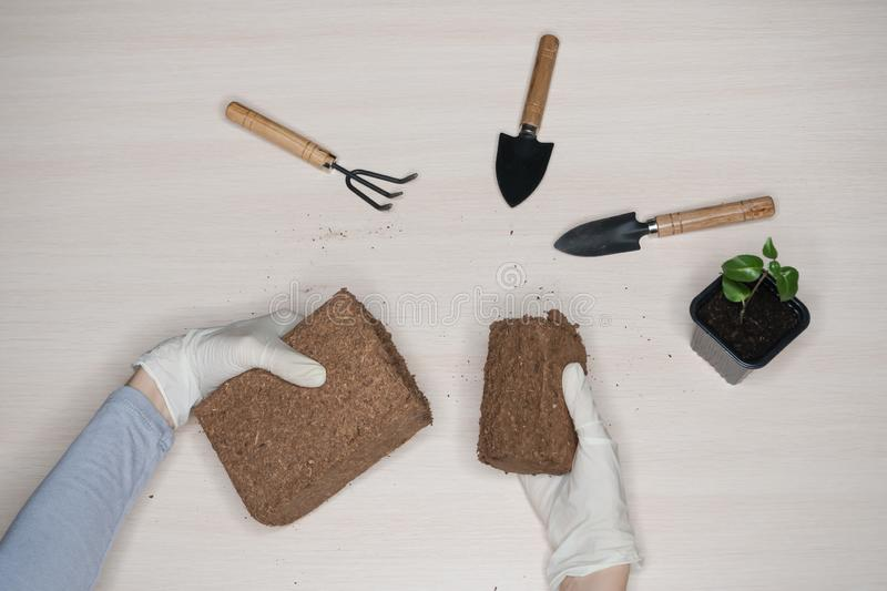 Coconut substrate for soil. Pressed coconut substrate briquette.  stock photo
