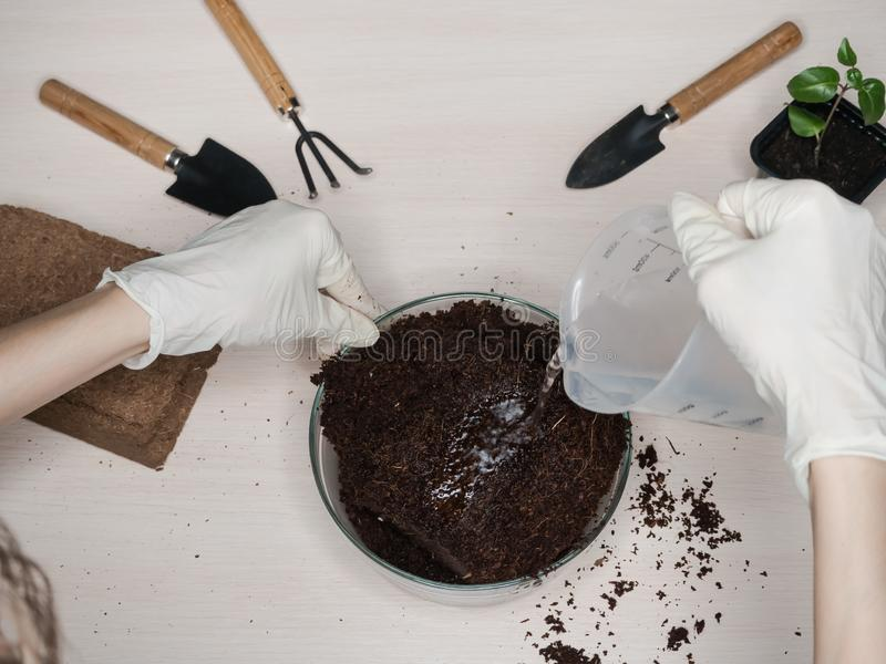 Coconut substrate for soil. Pressed coconut substrate briquette.  stock image
