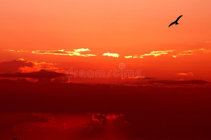 Om omhoog boven de hemel te vliegen royalty-vrije stock fotografie