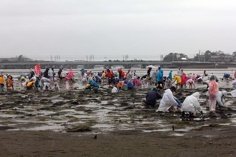 Om shell in Hamamatsu Japan, de mensen te vangen om shell of de vissen te vangen en te verzamelen stock foto