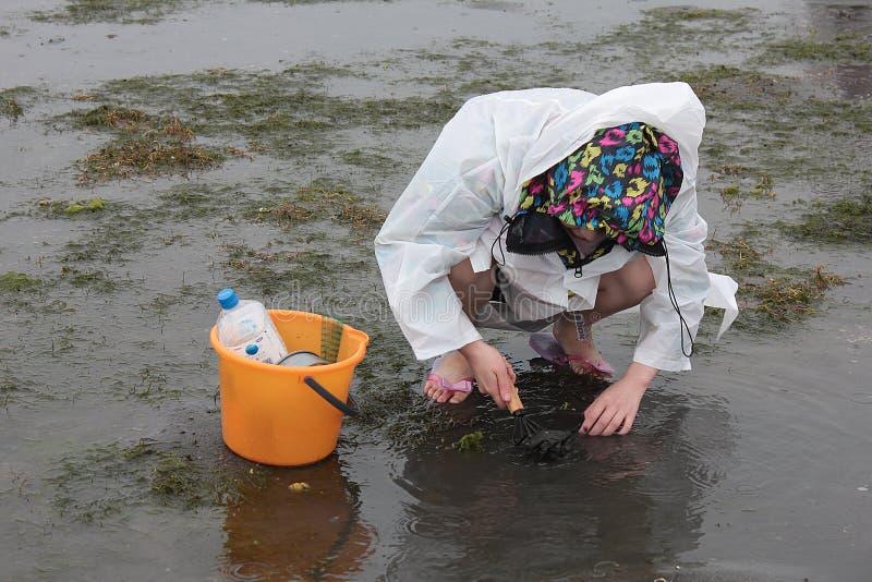 Om shell te vangen in Hamamatsu Japan, de mensen aan catach en shell of de vissen te verzamelen royalty-vrije stock fotografie