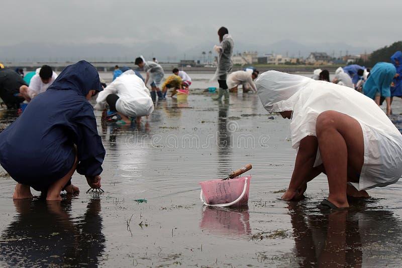 Om shell te vangen in Hamamatsu Japan, de mensen aan catach en shell of de vissen te verzamelen royalty-vrije stock foto's