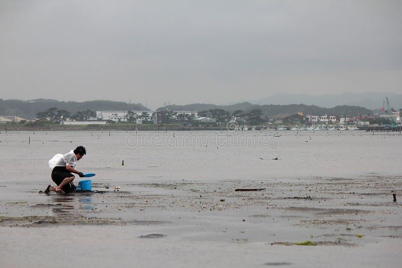 Om shell te vangen in Hamamatsu Japan, de mensen aan catach en shell of de vissen te verzamelen stock fotografie