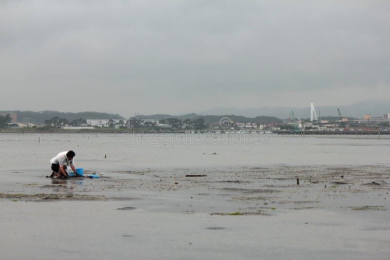 Om shell te vangen in Hamamatsu Japan, de mensen aan catach en shell of de vissen te verzamelen royalty-vrije stock foto