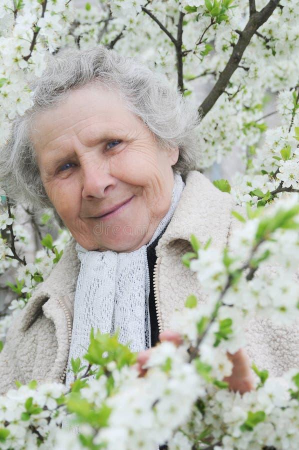 Oma auf Hintergrund der weißen Blumen stockfotografie