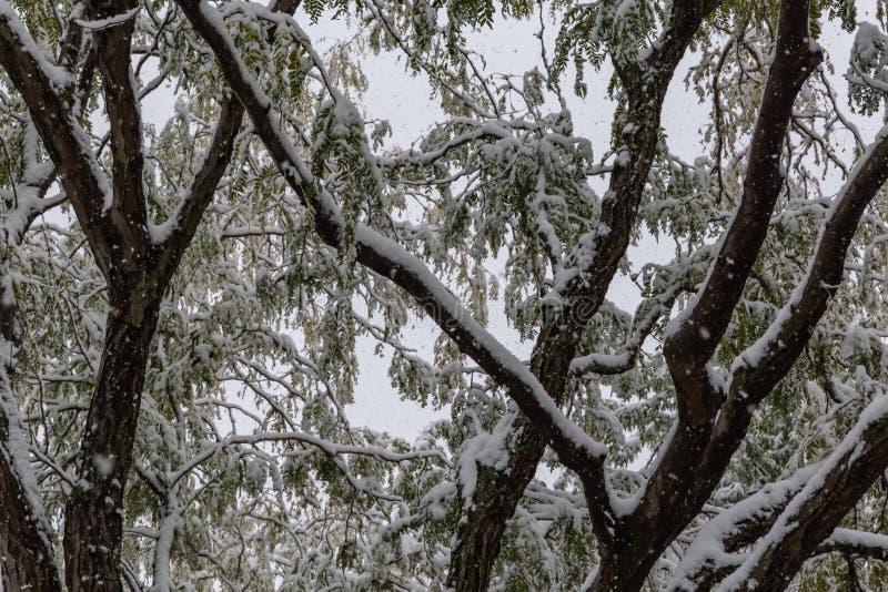 Neighborhood under siege: First snow of 2018 winter season in Omaha Nebraska USA. An Omaha neighborhood, photo taken through an upper level window, under siege stock image
