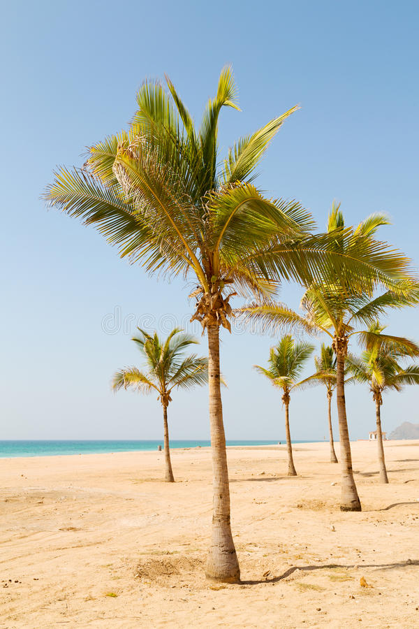 In oman arabic sea palm the hill near. Near sandy beach sky palm and mountain in oman arabic sea the hill stock photos