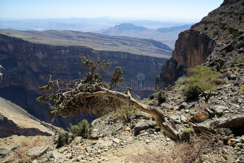 Oman Grand Canyon. Amazing view over the Grand Canyon of Oman Omani royalty free stock photography