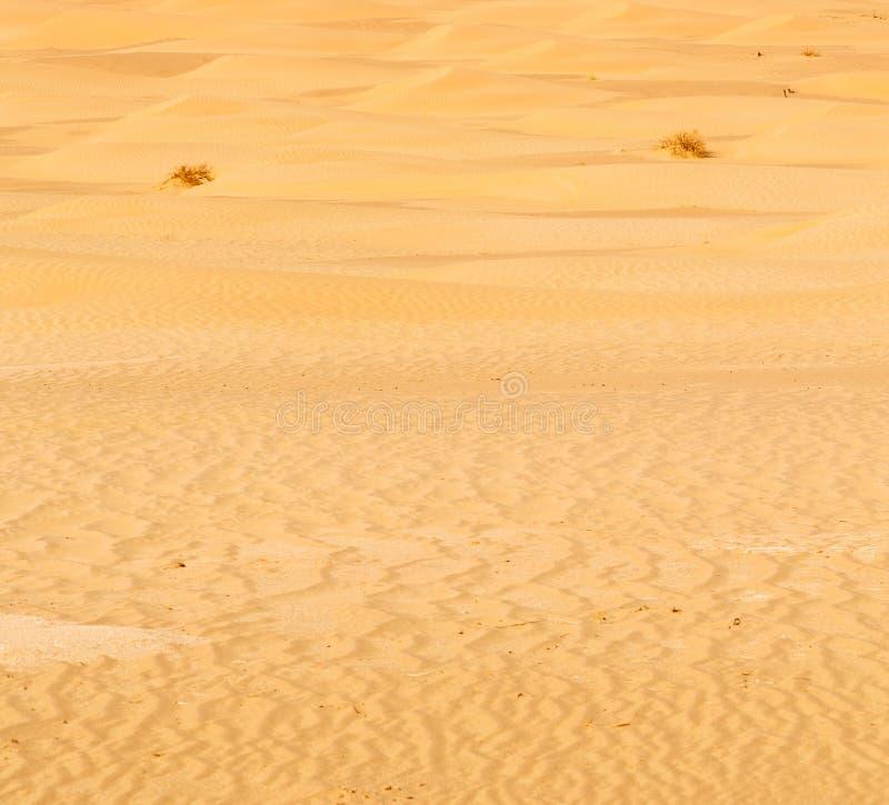 in oman old desert rub al khali the empty quarter and outdoor stock image