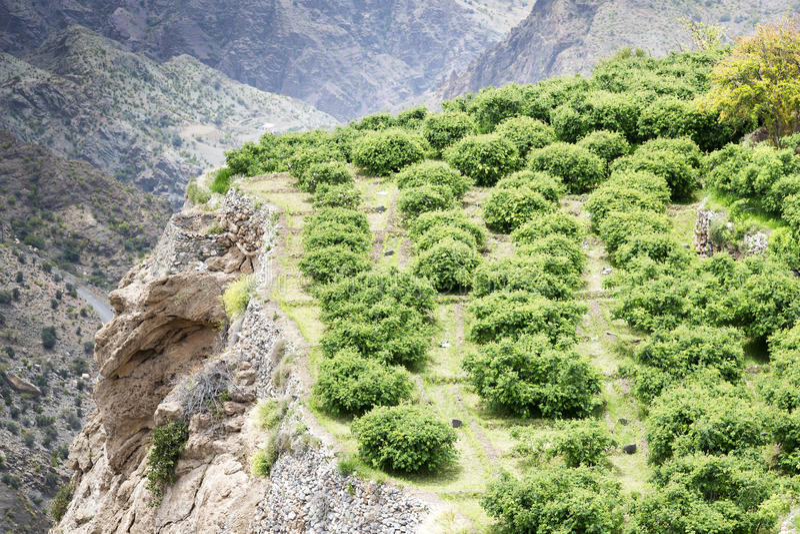 Oman Saiq Plateau stock photography