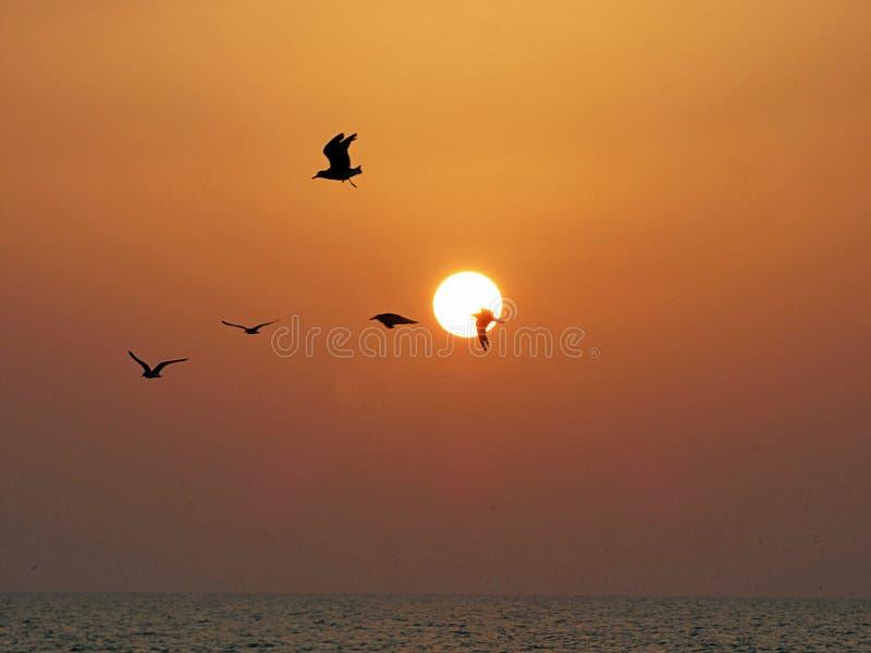 Oman, Salalah, widok zmierzch z ptakami w locie zdjęcie stock