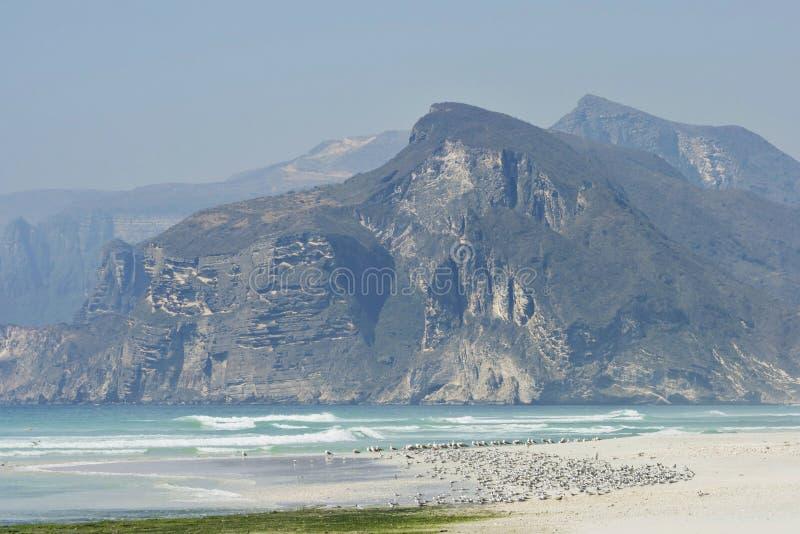 Oman: Strand i Dhofar arkivbilder