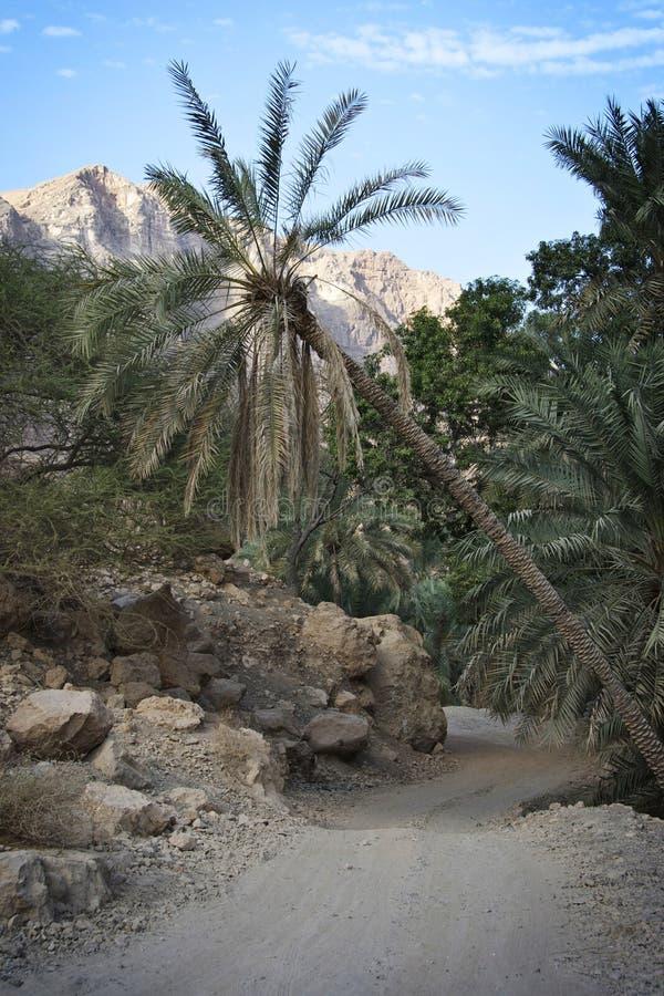 Oman: Wadi royaltyfri bild