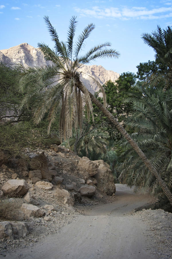 Oman: Wadi lizenzfreies stockbild