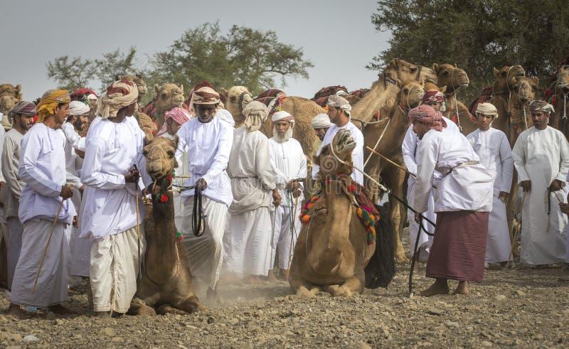 Omani mężczyzna dostaje przygotowywający ścigać się ich wielbłądy na zakurzonym kraju zdjęcia royalty free