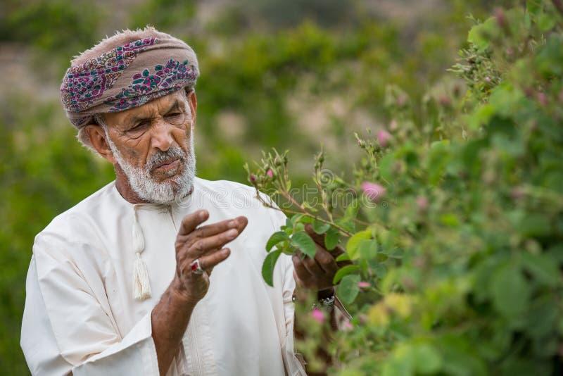 Omani mens het plukken rozen stock fotografie