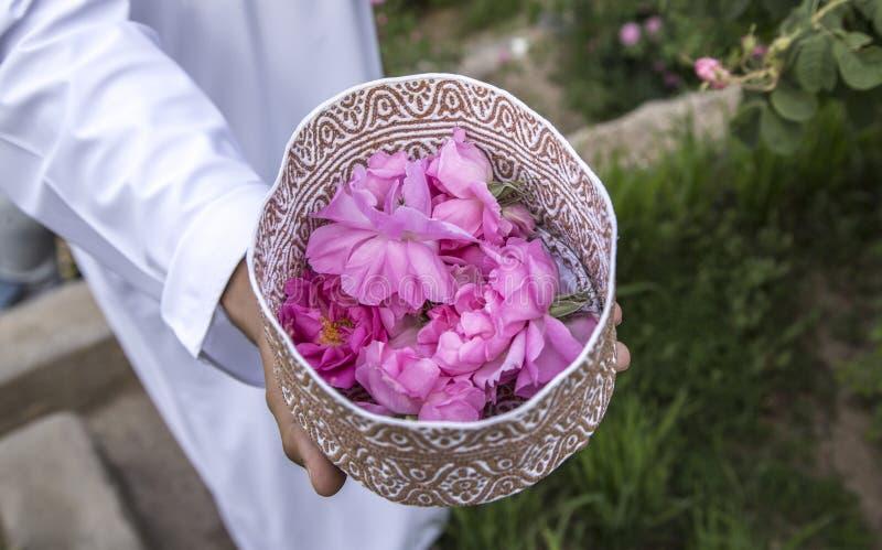 Omani mens met roze bloemblaadjes om rozewater te maken dat als traditionele geneeskunde wordt gebruikt; schoonheidsmiddelen; voe royalty-vrije stock foto's