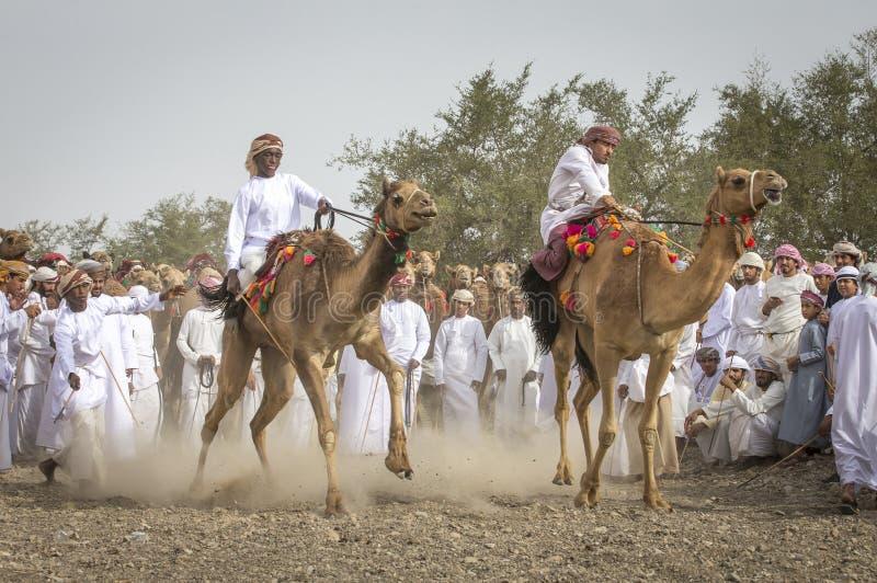 Omanska män som får klara att springa deras kamel på ett dammigt land royaltyfri foto