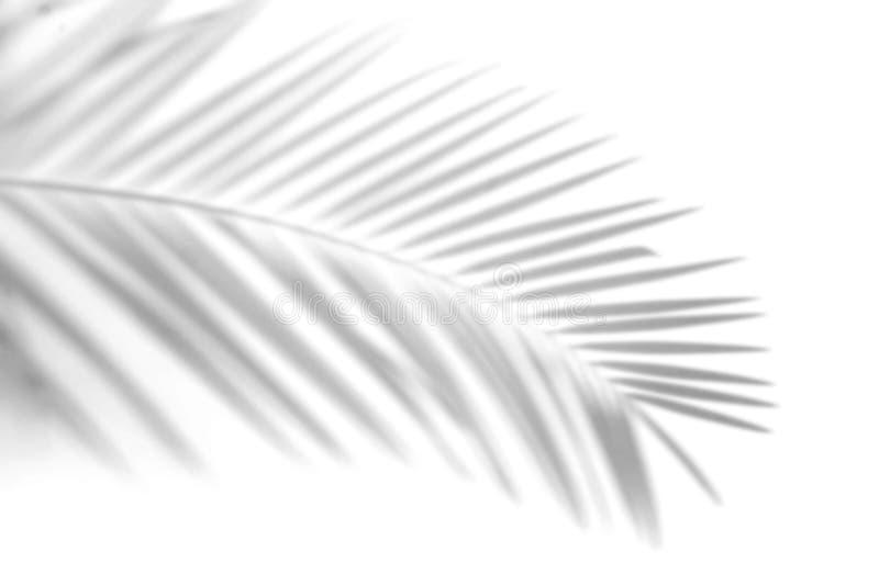 Ombra astratta fondo vago delle foglie di palma delle ombre foglie grige cui rifletta i mura di cemento su una superficie bianca  illustrazione di stock