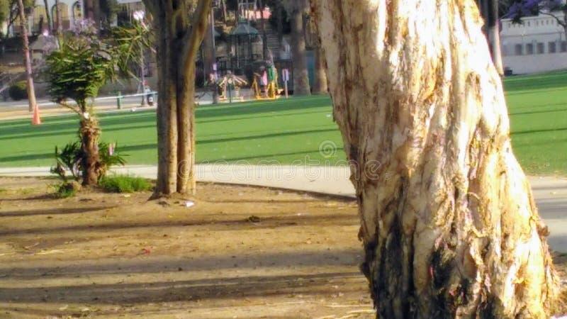 Ombra degli alberi n immagini stock libere da diritti