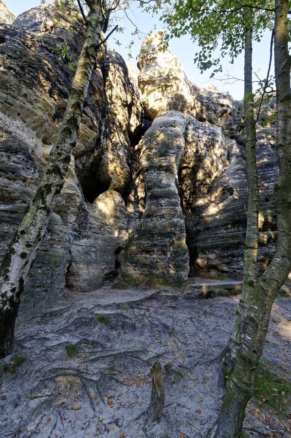 Ombra degli alberi su roccia immagini stock libere da diritti