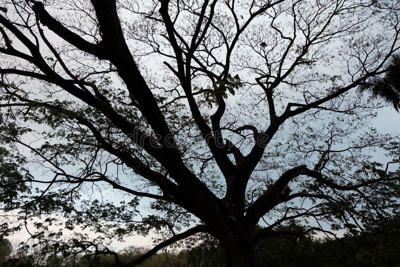 Ombra dei rami di albero fotografia stock libera da diritti