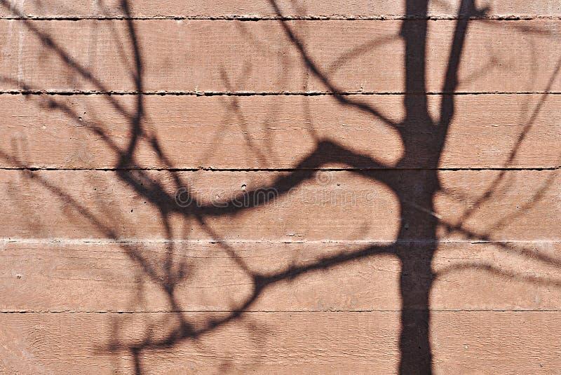 Ombra dell'albero fotografie stock
