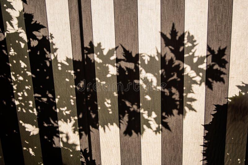 Ombra dell'albero sulla tenda, fondo fotografie stock libere da diritti